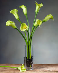 Calla Lily Vase Life Medium Calla Lily Silk Flower Stems For Casual Decorating At Petals