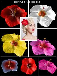 flower for hair hibiscus flower for hair 3d figure assets bijan studio