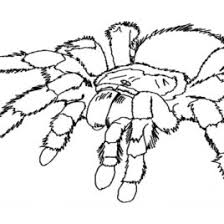 small spider coloring kids drawing coloring pages