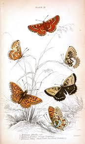 animal u2013 insect u2013 butterfly u2013 british butterflies u2013 16 vintage