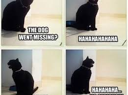 Missing Cat Meme - the dog went missing cat humor