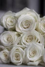 Wholesale Flowers Miami Wholesale Flowers For The Public In Miami Florida Blush Wedding