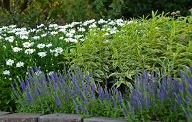gardening calendar walters gardens inc