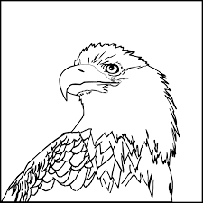 b u0026w clipart eagle pencil and in color b u0026w clipart eagle