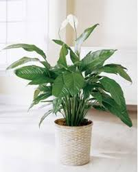 Best Plant For Indoor Low Light Stop Wasting Money On Plants That Die Easily These 7 Houseplants