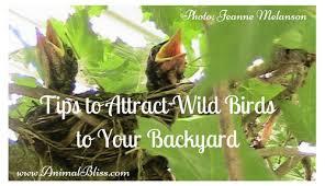 Backyard Wild Birds Tips To Attract Wild Birds To Your Backyard Become A Bird Watcher
