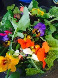 nasturtium flower 10 reasons you need nasturtiums growing today gaias organic gardens