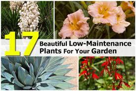 17 beautiful low maintenance plants for your garden