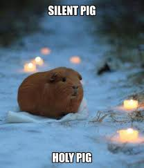 Lonely Meme - a lonely guinea pig memes lol