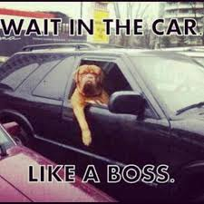 Dog In Car Meme - the top 100 dog memes of 2017 pro pooch