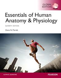 Human Physiology And Anatomy Pdf Essentials Of Human Anatomy And Physiology Book Excellent 10 Book