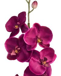 orchid flower phalaenopsis orchid silk flower stems for casual decorating at petals
