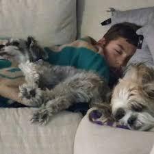 dog euthanasia happy endings in home pet euthanasia 14 photos 80 reviews