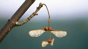 bbc bitesize ks3 biology plant reproduction revision 4