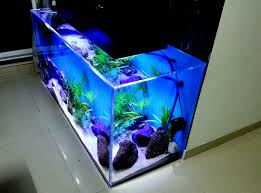 fish aquarium design home ideas decor gallery concept loversiq