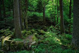 Deep Forest Green Ecotourism Germany The Black Forest Goes Green Eluxe Magazine