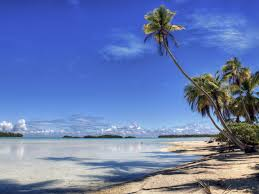 palm tree wallpaper beaches nature wallpapers for free download