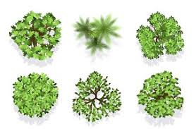 72 vector trees top view objects creative market