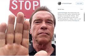 Arnold Schwarzenegger Memes - arnold schwarzenegger on being ballsy imgur