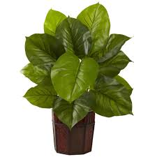 large houseplants decorative house plants home decor 2017
