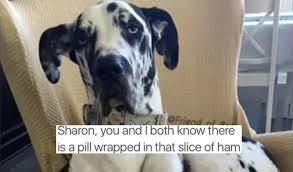 Great Dane Meme - classic dog memes to make you laugh viral dog