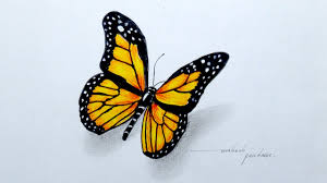 drawing a beautiful butterfly