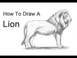 how to draw a lion youtube
