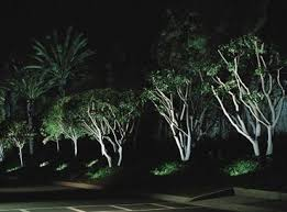 Outdoor Up Lighting For Trees Wyvis Uplit Tree Landscape Lighting Pinterest Outdoor