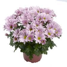 pot plants royal van zanten