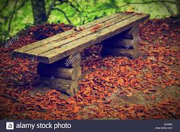 old bench with autumn leaves in a fall forest stock photo