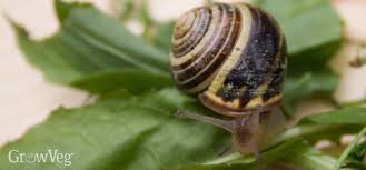 Where Can You Find Snails In Your Backyard Using Eggshells In The Garden