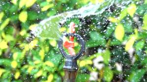 watering of nozzle sprinkler motion on morning and tree
