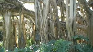 what ever happened to cypress gardens florida youtube