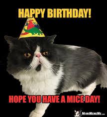 Cat Happy Birthday Meme - funny cats tell birthday jokes happy birthday from kitty pg 1 of 8