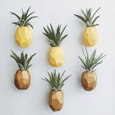 cute plant pineapple air plant magnet w air plant pineapple air air plants