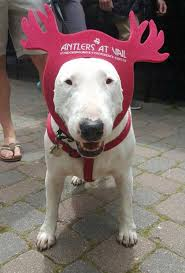 thanksgiving goes to the dogs at antlers at vail hotel fido friendly