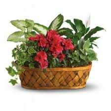 funeral plants plants galore birthday funeral flower arrangements in