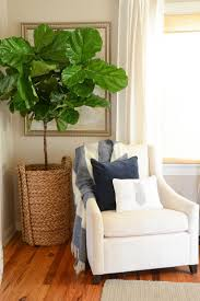 Where To Buy Bookshelves by Home Accessories Classic Bookshelves With Fiddle Leaf Fig Tree