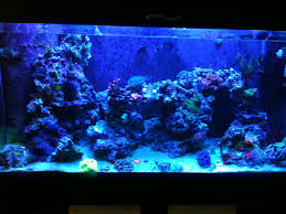 Aquascaping A Reef Tank Why I Involuntarily Re Did My Aquascaping U2013 Mr Saltwater Tank