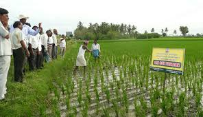 agriculture projects for students system of rice intensification kenya archives