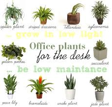 10 Low Light Low Maintenance Plants For Office Desk Find A Way