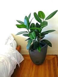 best indoor house plants best indoor house plants best indoor tree plant easiest indoor