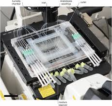 si e social d edf live imaging of root bacteria interactions in a microfluidics setup
