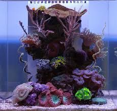 Floating Aquascape Reef2reef Saltwater And Reef Aquarium Forum - 543 best aquarium images on pinterest marine aquarium reef