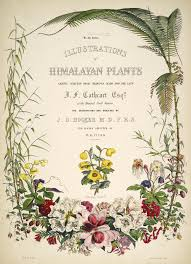 illustrations of himalayan plants chiefly selected from drawings