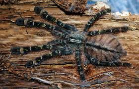 spiders add bite at aquarium this easter edinburgh 247