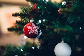 christmas tree flower lights free images branch flower celebration pine holiday hanging