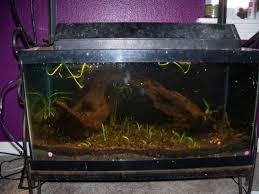 Asian Themed Fish Tank Decorations Aquatics Set Up A Fresh Water Aquarium For Cheap Pethelpful