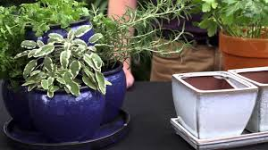 Window Sill Herb Garden by Windowsill Gardening 101 Youtube