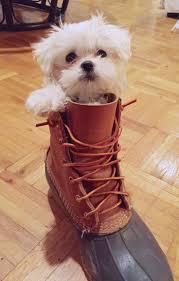 Munchkin Pet Gate 287 Best Dogs Images On Pinterest